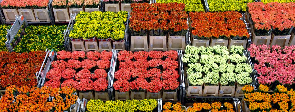 export groenten fruit planten en bloemen. Black Bedroom Furniture Sets. Home Design Ideas
